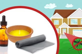 How to keep mosquitoes away from your house