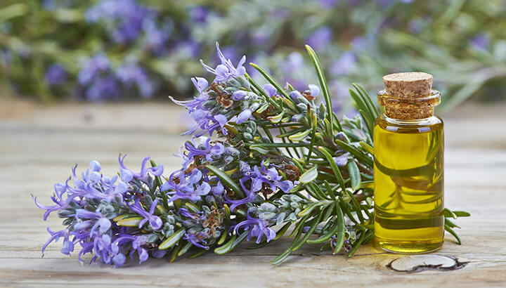 Plant rosemary in your garden to keep mosquitoes away.