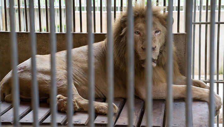 Zoo animals are stuck in cages for life.
