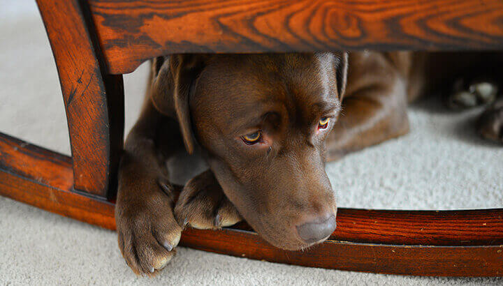 CBD may promote feelings of calm for your anxious pet.