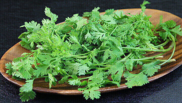 Jal jeera water made with cilantro can help stabilize blood sugar levels.