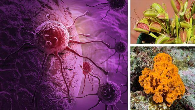 4 Strange Cancer Remedies That Have Really Worked