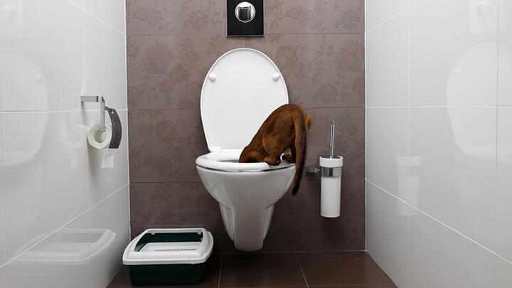6 Toilet Seat Habits To Always Follow