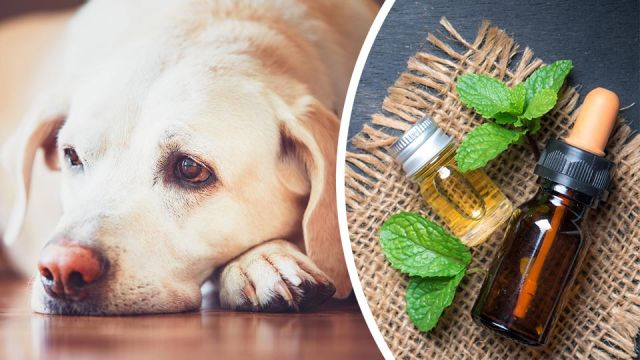 instead of prozac try 5 natural remedies for your pet s anxiety or