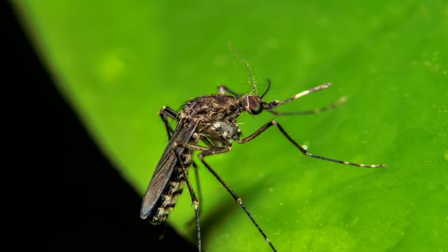 Deadly Mosquito-Borne Virus Present in South Florida